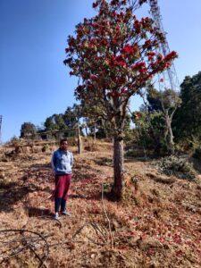 DM Eva Srivastava reached Budogi village and planted apple plantation in Devendra Chauhan's garden