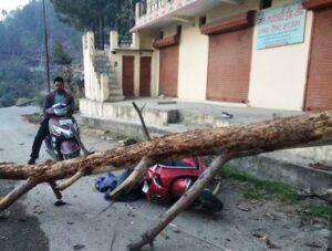 वनाग्नि से गिरे पेड़ ने स्कूटी को किया क्षतिग्रस्त